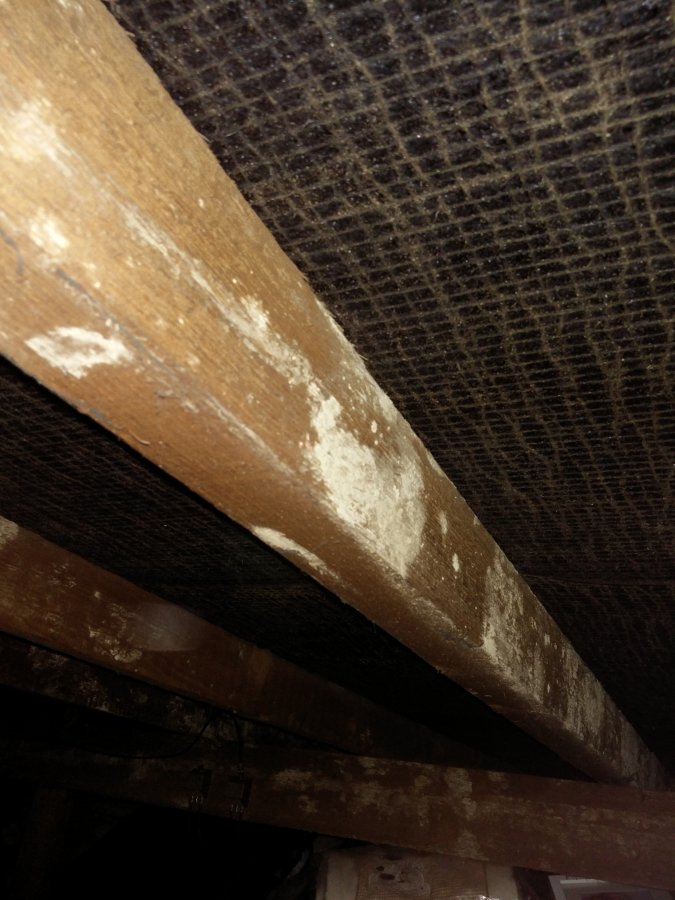Roof Rafters White Spot Mould Diynot Forums