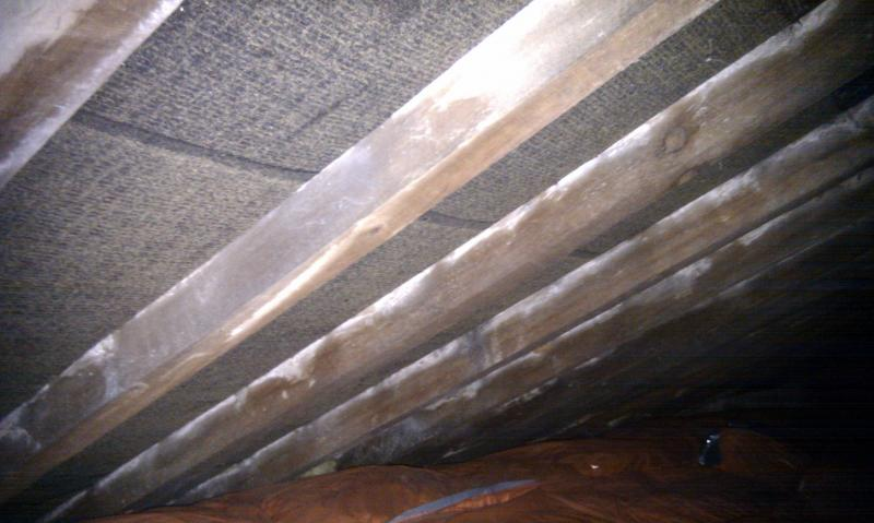 Mould On Roof Timbers Diynot Forums