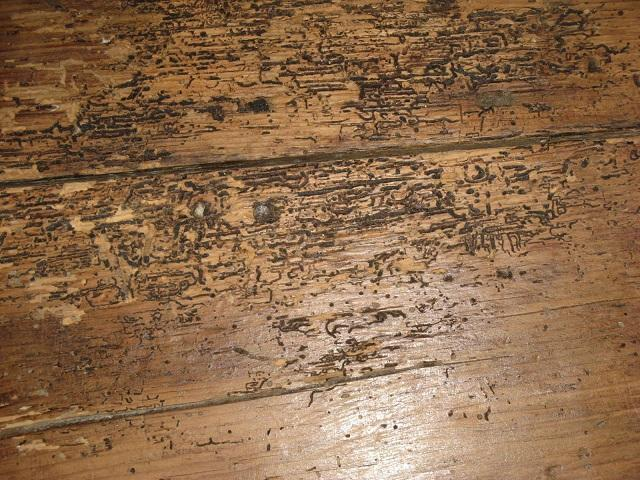 Everbuild Woodworm treatment + Permethrin on dining table